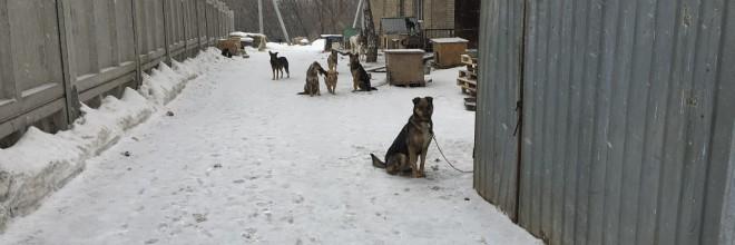 Благотворительный фонд защиты животных «Доброта», Уфа